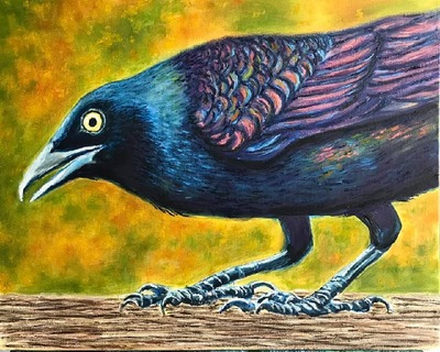 Irridescent Grackle
