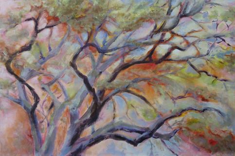 Quercus Virginiana/Southern Oak